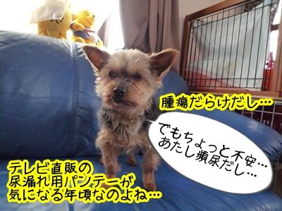 じじばばP1350457