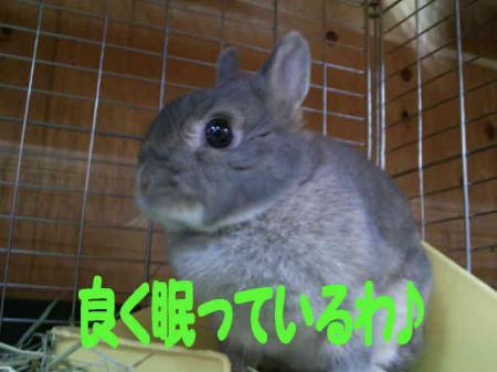 子共達 5(羅夢)