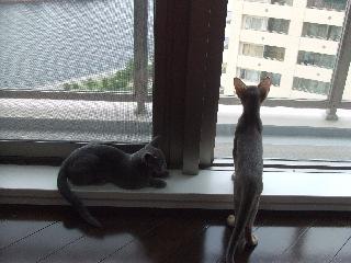窓辺が好き
