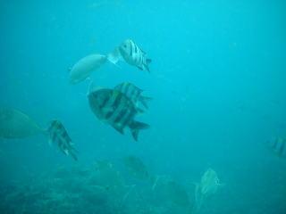 展望塔の魚1
