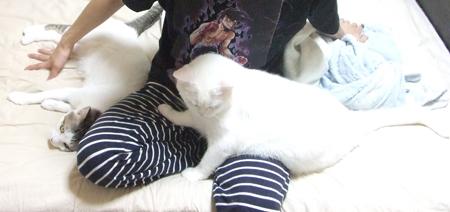 猫に囲まれる1_091002