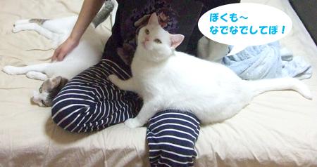 猫に囲まれる2_091002