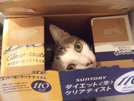 ビール箱リン_091027