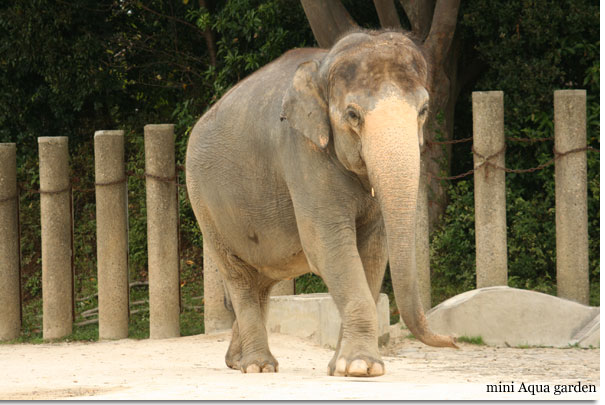 elephant20091010.jpg