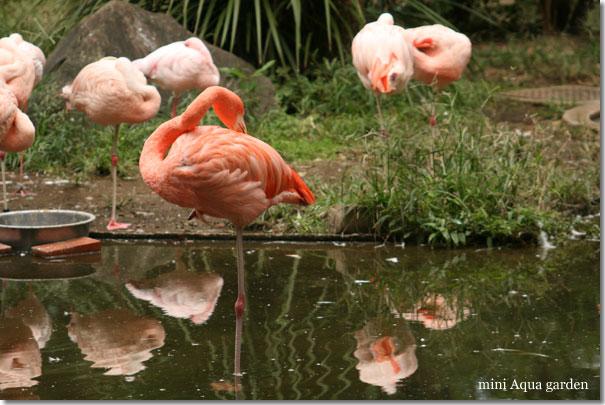 flamingo20091010.jpg