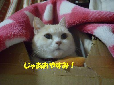 じゃあおやすみっっ!