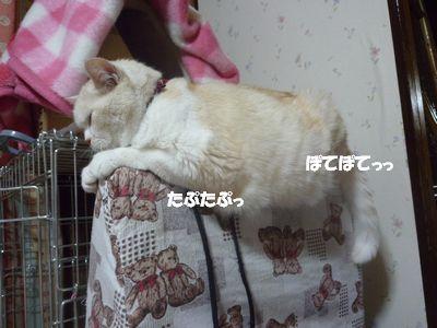 ぽてぽて たぷたぷ