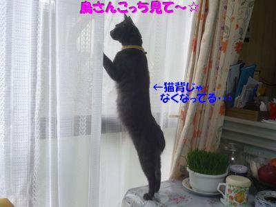 鳥さんこっちみて~☆