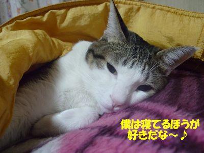 僕は寝てるほうが好きだな~☆
