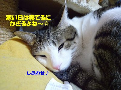 寒い日は寝てるにかぎるよね~☆