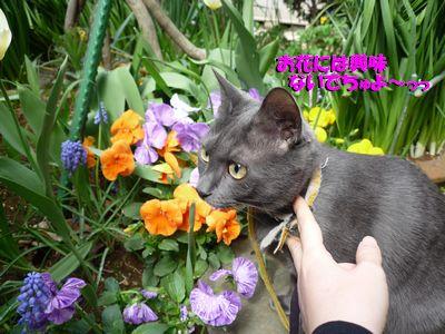 お花には興味ないでちゅよ~っっ