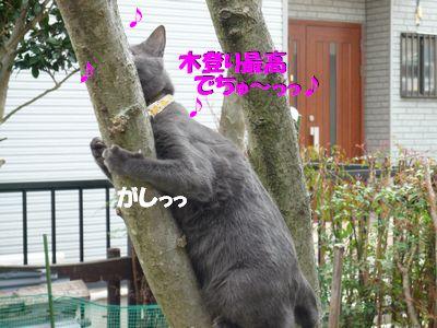 木登り最高でちゅ~っっ☆