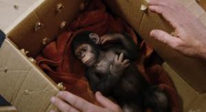 猿の惑星17