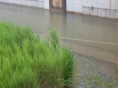 台風12号と川