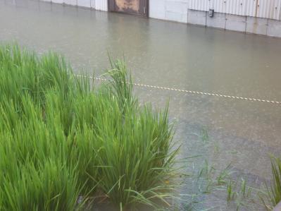 台風12号と川2