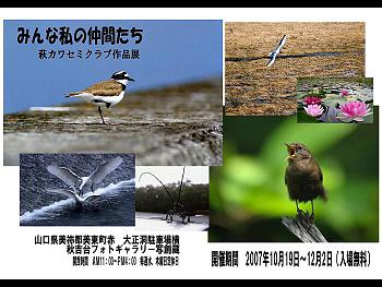 萩カワセミクラブ写真展「みんな私の仲間たち」