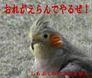 2008030803.jpg