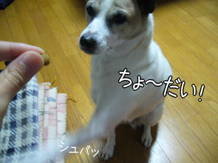 2007-11-16-4.jpg