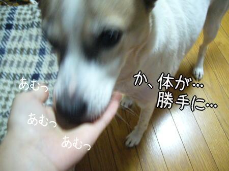 2007-11-16-6.jpg