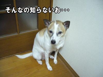 2007-11-30-5.jpg