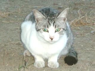 松本の猫さん2