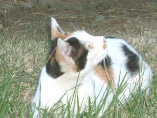 松本の猫さん3