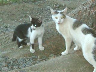 松本の猫さん4