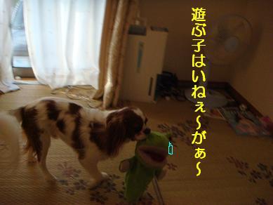 20071107_1.jpg