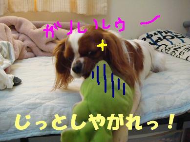 20071114_3.jpg
