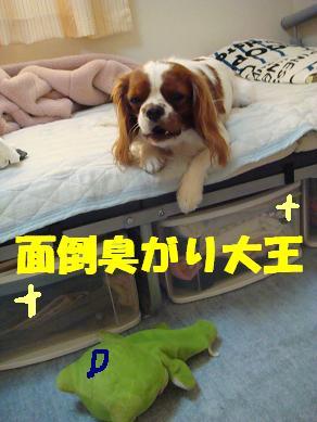 20071114_4.jpg
