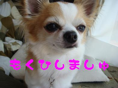 20091108_2.jpg