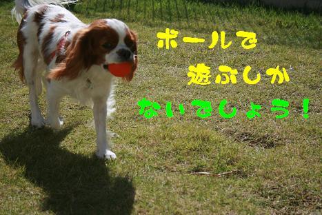 20091109_2.jpg