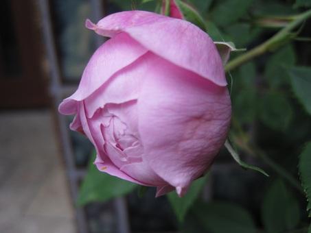 20110507ヴィクトリア1