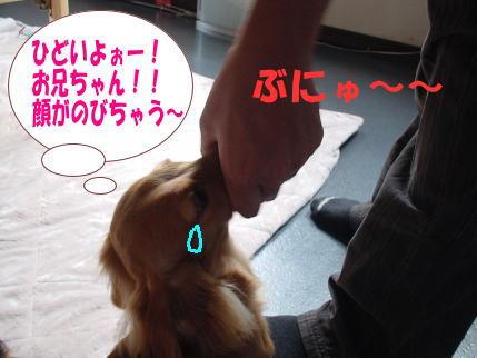 DSC0006011.jpg