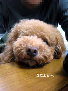 091029maruko.jpg