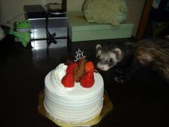 スオウとケーキ①