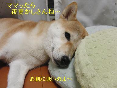 もう寝ますよ~