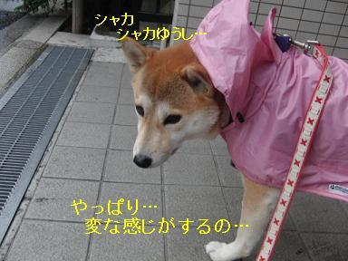 ガンバレ☆ももちゃん!