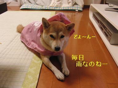雨ですよ~
