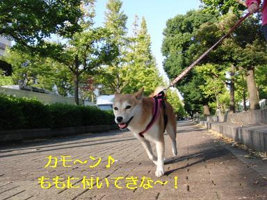今からお散歩♪