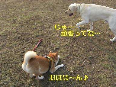 ピンク~待って~!