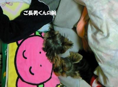 CA0Y1D09 2009.11.10 ①