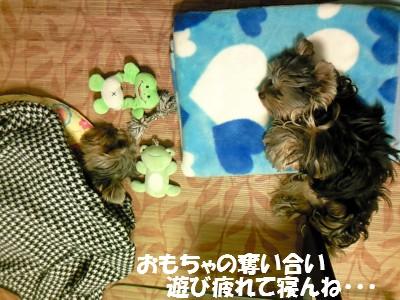 CAFVJW2V 2009.11.10 ②