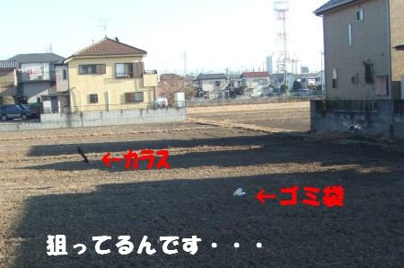 DSCF4526.jpg