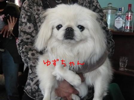 koma_off_yuzu2.jpg