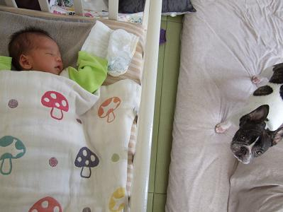2011 寛太 誕生 083 vf