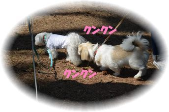 DSC_2662.jpg