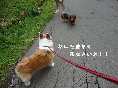 お散歩3ワン