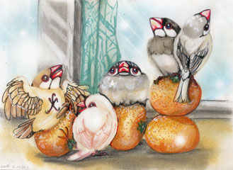 蜜柑と文鳥WEB
