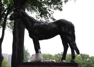 雨も滴る良いお馬